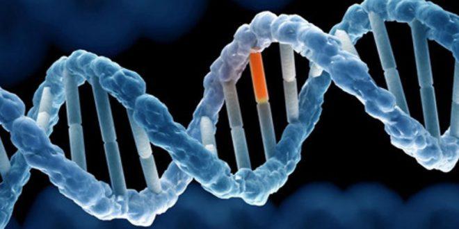 Phân biệt đột biến gen và đột biến nhiễm sắc thể